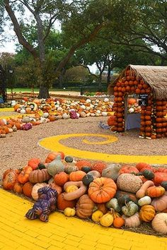 Fall is the best season - the food is delicious, the weather is mild and the gourds are everywhere. Here, 15 great spots around the country to find the perfect pumpkin. Pumpkin Patch Near Me, Pumpkin Patch Kids, Pumpkin Patch Birthday, Pumpkin Patch Party, Best Pumpkin Patches, Pumpkin Farm, Diy Pumpkin, Pumpkin Plants, Pumpkin House