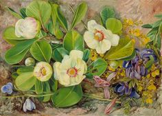 Wild Flowers of Brazil by Marianne North; c. 1873; Oil on board; Collection: Royal Botanic Gardens, Kew, England