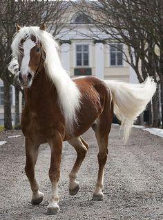 Halfinger-small horse