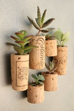 Gebruik een kurk om er kleine plantjes in te planten. Lijm een magneet op de kurk en hang 'm op de koelkast!