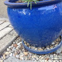"""Rocks in the drainage pan of potted rosemary prevent """"wet feet"""". Rosemary Garden, Rosemary Plant, Herb Garden, Vegetable Garden, Growing Gardens, Growing Herbs, Landscaping Plants, Garden Plants, Upside Down Plants"""
