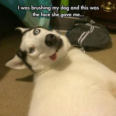 Funny Dog. Dog crazy face. Funny Pictures Of The Day – 92 Pics