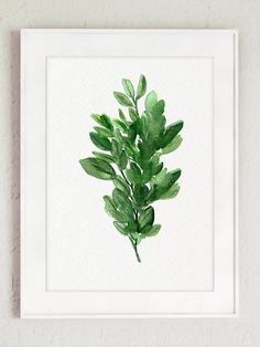 Set of 3 Herbs Wall Decor. Thyme Watercolor Painting. Sage Giclee Fine Art Print. Oregano Marjoram Herb Illustration Green Kitchen Decor. Home Garden Herbs Chart. A price is for the set of three different Kitchen Herbs. Type of paper: Prints up to (42x29,7cm) 11x16 inch size are printed on Archival Acid Free 270g/m2 White Watercolor Fine Art Paper and retains the look of original painting. Larger prints are printed on 200g/m2 White Semi-Glossy Poster Paper. Colors: Archival high-q...