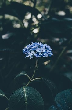 One of many great free stock photos from Pexels. This photo is about nature, petals, plant Iphone 6 Wallpaper Tumblr, Flower Phone Wallpaper, Iphone Background Wallpaper, Galaxy Wallpaper, Screen Wallpaper, Phone Wallpapers, Aesthetic Backgrounds, Aesthetic Iphone Wallpaper, Aesthetic Wallpapers