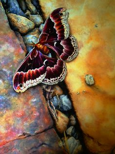 Butterfly by Jo Lynch
