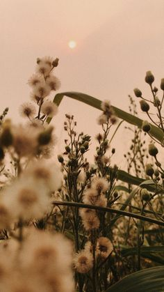 Vintage Flowers Wallpaper, Flower Background Wallpaper, Nature Wallpaper, Wallpaper Backgrounds, Aesthetic Pastel Wallpaper, Aesthetic Backgrounds, Aesthetic Wallpapers, Nature Aesthetic, Flower Aesthetic
