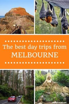 Some of the best day trips from Melbourne by car for your trip itinerary