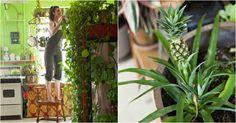 Вызвать усиленный рост и цветение даже самого хилого растения помогут обычные дрожжи! Вот рецепт цветочной подкормки от «Так Просто!».