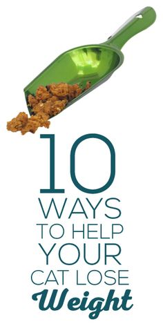 10 Ways To Help Your Cat Lose Weight