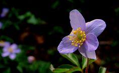 Flower at Alnwick Gardens