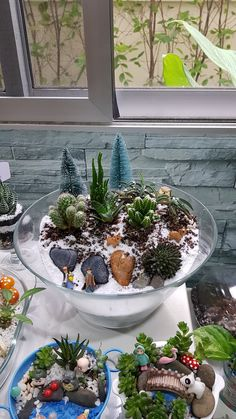 Succulents In Containers, Cacti And Succulents, Planting Succulents, Cactus Plants, Mini Cactus Garden, Mini Zen Garden, Garden Art, Cactus Terrarium, Garden Terrarium