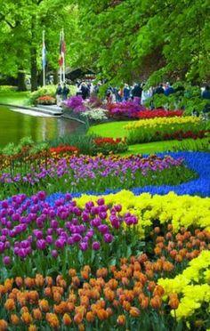 tulips in Netherlands Nature: Garden: Flowers: Tulips (CTS) Beautiful World, Beautiful Gardens, Beautiful Places, Beautiful Park, Tulips Garden, Garden Planters, Parcs, Dream Garden, Beautiful Landscapes