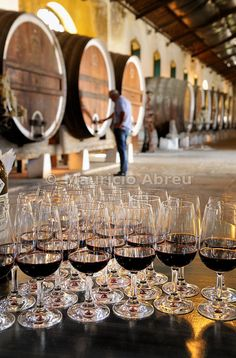 Wine tasting at the Colares Regional Cellars. Sintra, Portugal | Mauricio Abreu, Images of Portugal