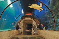 Visiting Vegas? Take the kids to the shark reef inside The Mandalay Bay Hotel and Casino.
