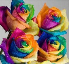 50 pcs Seeds Rare Holland Rainbow Rose Flower Home Garden Pet dog headdress