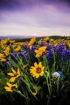 Dramatic Wildflowers by Adrian Blair on 500px