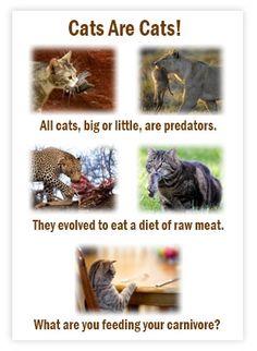 Feline Diabetes: The Influence of Diet - Feline Nutrition