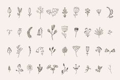 Huge set of 72 handsketched florals elements: 40 flowers and plants, 10 floral frames and laurels, dividers and ribbons. All these nice deisgn elements you may Mini Tattoos, Cute Tattoos, Flower Tattoos, Tatoos, Leaf Outline, Flora Design, Line Flower, Little Doodles, Hand Drawn Flowers