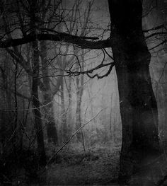 "by Jove, I wonder,"" his thoughts ran on, ""whether a tree—er—in any lawful meaning of the term can be—alive. Black And White Tree, White Trees, Forest Floor, Mystique, Dark Forest, Dark Places, Tree Of Life, Dark Art, Light In The Dark"