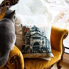Cushions and cats- what could be better?  Our microfibre cushions offer a suede-like finish and are hand made by our talented seamstress here in Melbourne.  The inserts are filled with recycled PET bottles which makes them both sustainable and super plush.  Shop our gorgeous cushion range including the 'Flinders Street' design via the link in our bio.
