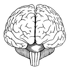Simple Drawing Of Brain Brain Clipartsco | Art Reference | Pinterest ...