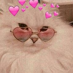 Cute Cat Memes, Cute Animal Memes, Cute Love Memes, Cute Cat Wallpaper, Animal Wallpaper, Cute Disney Wallpaper, Wallpaper Desktop, Girl Wallpaper, Wallpaper Quotes