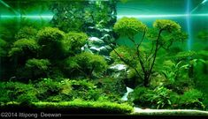 2014 AGA Aquascaping Contest - Entry #486