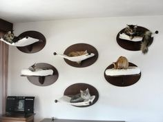 Cat wall - love it!