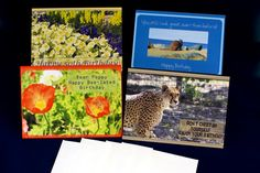 4 pk  5x7 #Birthday #photographed #greetingcards OccasionalNoteCards.etsy.com #etsy