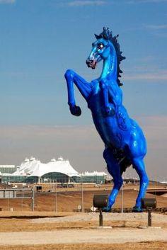 39 Best Blucifer Images International Airport Denver