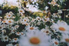 Resultado de imagem para flor vermelha tumblr