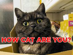 Meow meow meow meow? (How cat are you?)
