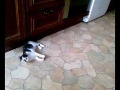 """Kätzchen jagt """"Kartoffel-Maus"""" - YouTube"""