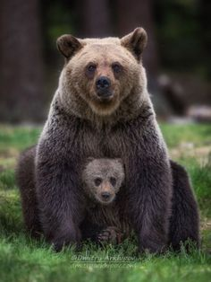 """beautiful-wildlife: """"Family Portrait by © Dmitry Arkhipov """" - Tiere - Chien Animals And Pets, Baby Animals, Funny Animals, Cute Animals, Baby Pandas, Strange Animals, Nature Animals, Interesting Animals, Love Bear"""
