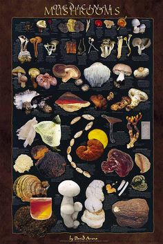 medicinal mushrooms. What a great poster. My favorite is the reishi/lingzhi.