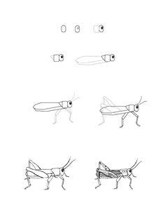 (2013-12) ... a grashopper
