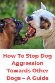 How To Stop Dog Aggression Towards Other Dogs – A Guide. While the majority of dogs are friendly or neutral towards other dogs, it is not unusual to see. Dog Attack, Dog Whisperer, The Deed, Guide Dog, Aggressive Dog, Dog Fighting, Positive Reinforcement, Outdoor Dog, Medical Conditions
