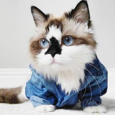 43 43 43 Beste Caturday Cats! images on Pinterest in 2018   Cat Feeding   3d1611