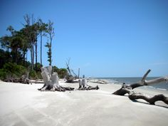 Driftwood Beach on Daufuskie Island -- one of my favorite places ever!