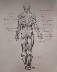 3/10/21 - Study done as part of a class at Katz Atelier, Wellington Video Game Artist, Anatomy Study, Concept, Feelings, Design, Atelier