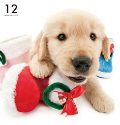 Artlist Collection THE DOG Golden Retriever calendar