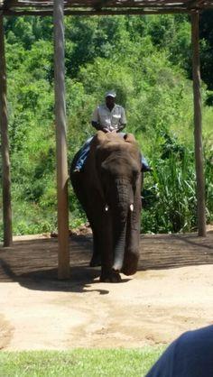 Elephant-Whispers Nelspruit South Africa