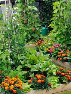 Bed Garden Design Love flowers and vegetables planted together! Mix ornamental plants with edible plants in your veggie garden.Love flowers and vegetables planted together! Mix ornamental plants with edible plants in your veggie garden. Garden Design, Green Thumb, Plants, Growing Vegetables, Outdoor Gardens, Garden Beds, Garden Landscaping, Garden Plants, Gardening Tips