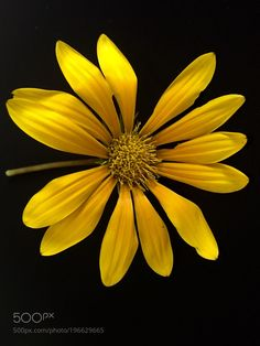 Yellow Daisy  by Ewunchik