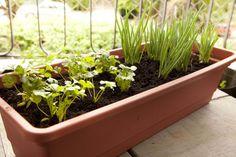 Passo a passo: aprenda a fazer uma horta orgânica em vaso - Casa e Decoração - UOL Mulher