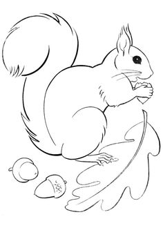 Flying Squirrel Coloring Page. Squirrel is a rodent mammal. Squirrels have a sma. - Flying Squirrel Coloring Page. Squirrel is a rodent mammal. Squirrels have a small body shape of ar - Fall Coloring Pages, Animal Coloring Pages, Printable Coloring Pages, Coloring Books, Squirrel Coloring Page, Flying Squirrel, Autumn Crafts, Applique Patterns, Craft Patterns