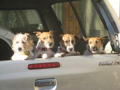 Quattro cani sullo stradone