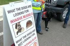 #Alberta trains dogs to detect species like mussels in Alberta's waterways - Globalnews.ca: Globalnews.ca Alberta trains dogs to detect…