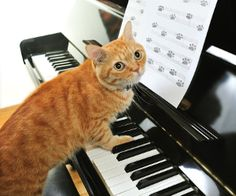 A yellow cute cat playing the piano by via Shutterstock Cute Kittens, Cats And Kittens, Ipad, Cat Couple, Unicorn Cat, Cat Posters, Orange Cats, Cat Doll, Ginger Cats
