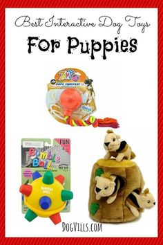 The Best Interactive Dog Toys For Puppies: Have a blast with your canine pal with these fun interactive dog toys for puppies that go way beyond a simple game of fetch. You'll love them too!